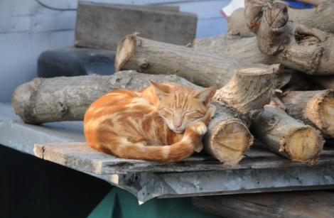 Tai O Village Lantau 11 Orange Cat
