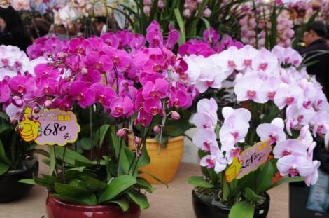 Victoria Park CNY Flower Market 2012-18