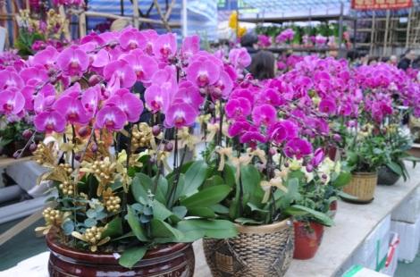 Victoria Park CNY Flower Market 2012-20