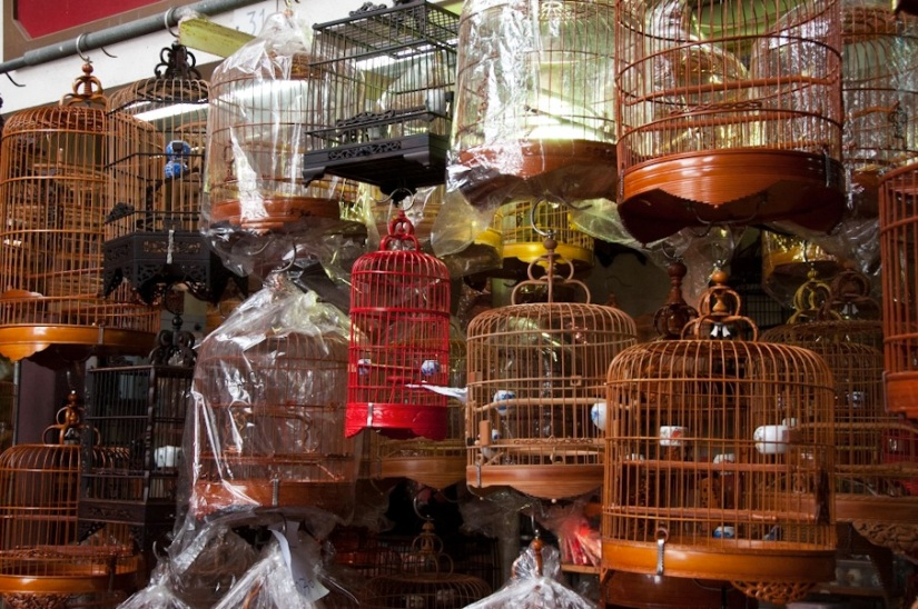 Bird market Mongkok Kowloon 7