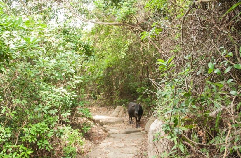 Lantau Trail 9-6 Vow on the way