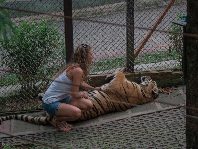 Chiang Mai Tiger Kingdom 3