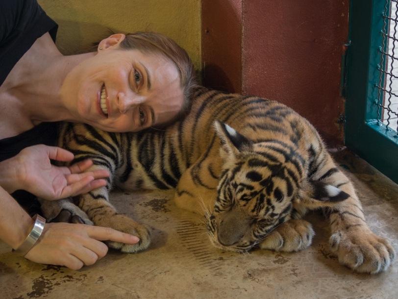 Chiang Mai Tiger Kingdom 6