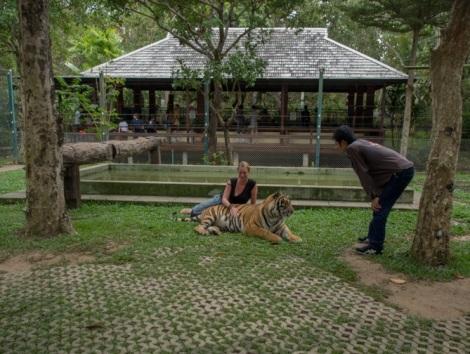 Chiang Mai Tiger Kingdom 9