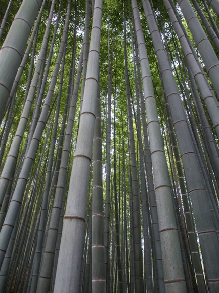 Bamboo Forest in Arashiyama 1