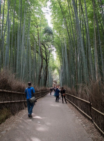 Bamboo Forest in Arashiyama 2