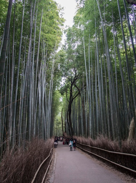 Bamboo Forest in Arashiyama 4