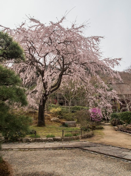 Jojakkoji Temple in Arashiyama 2