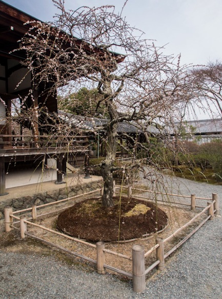 Tenryuji Temple in Arashiyama 2