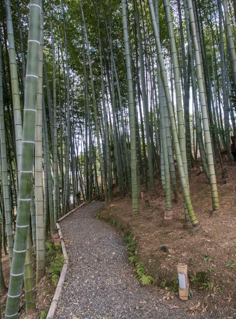 3 - Bamboo Path Arashiyama