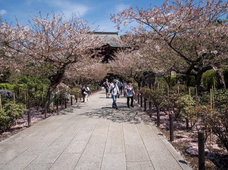 Kenchoji Temple Kamakura 1