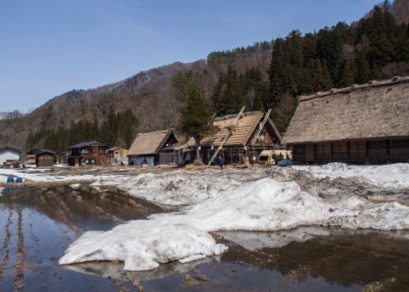 Shirakawa-go 12 thatching in the background