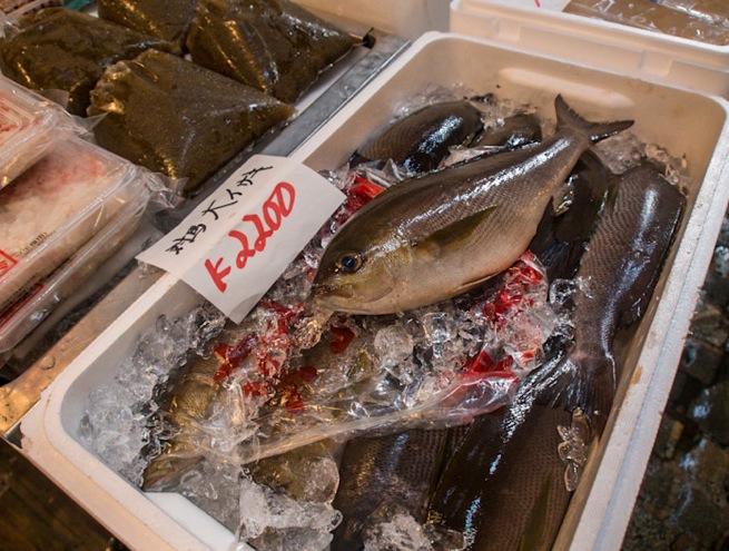Tsukiji Fish Market Fish 1