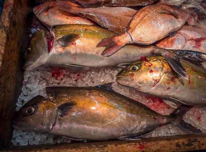 Tsukiji Fish Market Fish 2