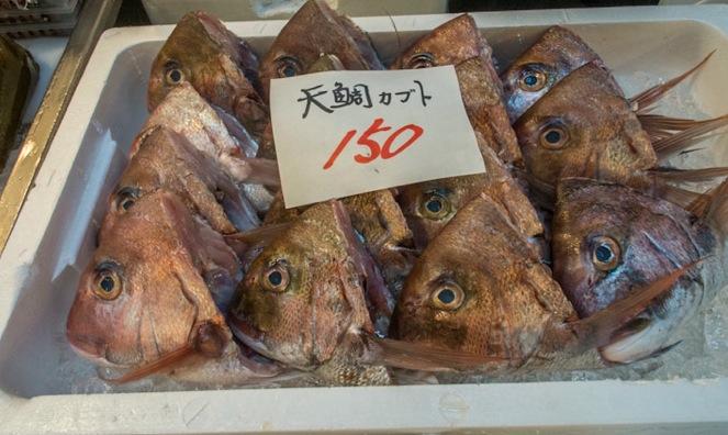 Tsukiji Fish Market Fish 3