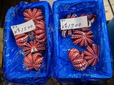 Tsukiji Fish Market Fish 4