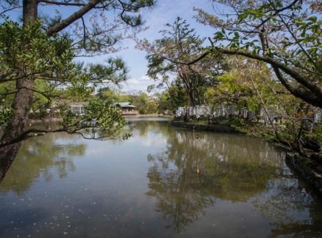 Tsurugaoka Hachiman-gū Kamakura 2