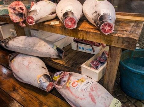 Tuna at Tsukiji FIsh Market 2