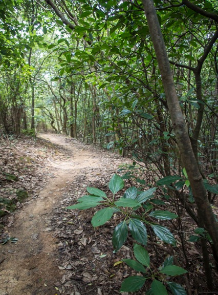 MacLehose Trail Stage 3-10