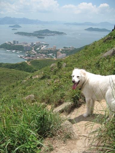 14 DB to Mui Wo Hike - Dog