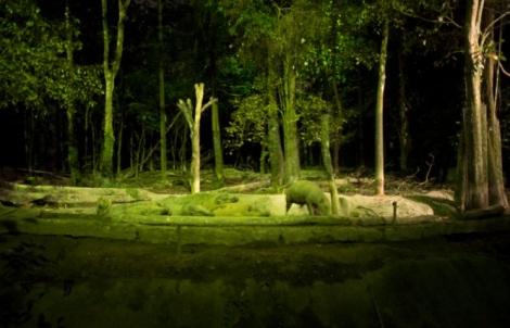 Night Safari 2