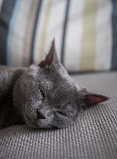 Sam sleeping 24.8