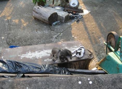 Tai O tu Tung Chung Hike 10 Kittens