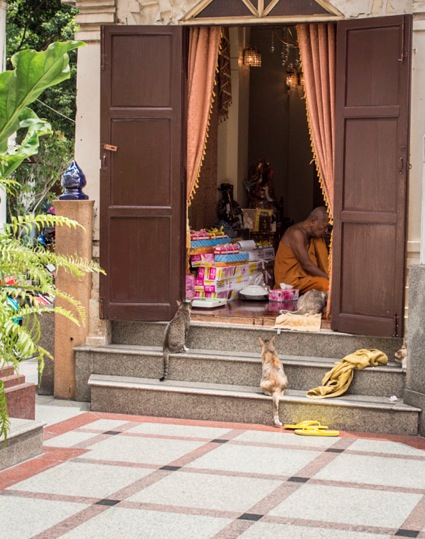 Bangkok Golden Temple Monk feeding cats