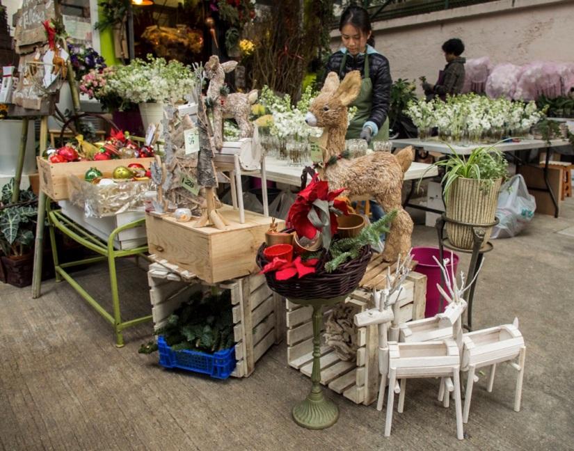 Sheung Wan Walk 5 Flowers