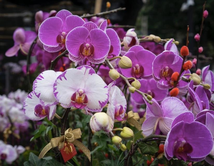 Victoria Flower Market 6 orchid