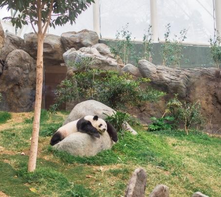 Ocean Park 2014-14 Panda