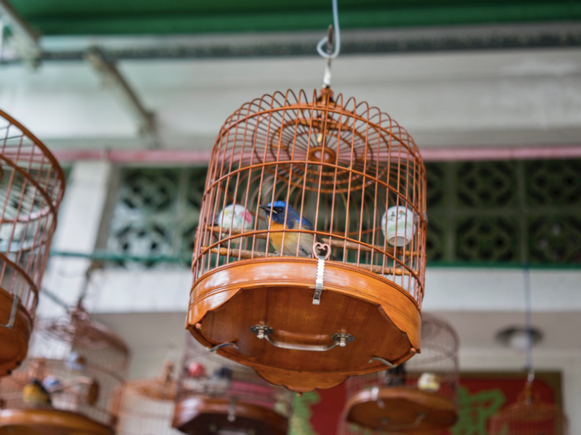 Hong Kong Bird Market Revisited 2014-2