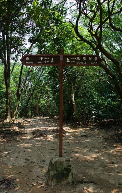 MacLehose Trail 4-5