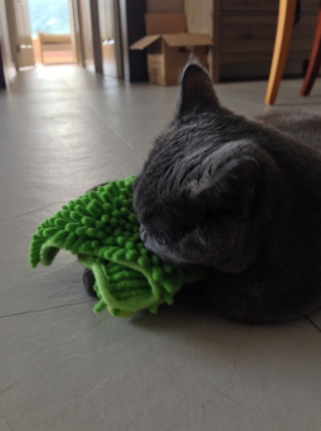 Sam with his green toy
