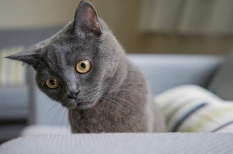 Sam the Cat 2014-7
