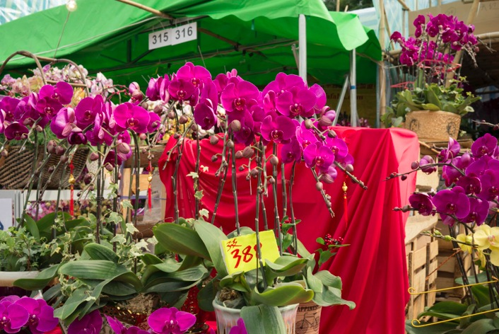 Victoria Lunar Flower Market 2015-2 Orchids