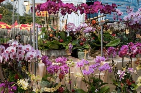 Victoria Lunar Flower Market 2015-3 Orchids