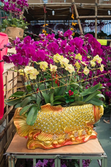 Victoria Lunar Flower Market 2015-4 Orchids