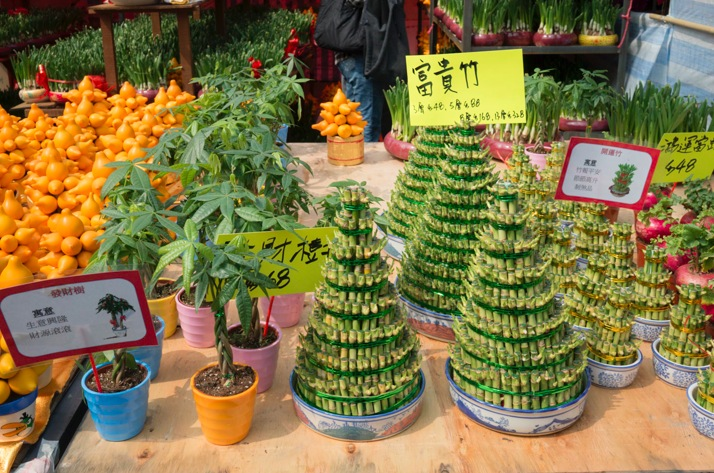Victoria Lunar Flower Market 2015-8 Bamboo