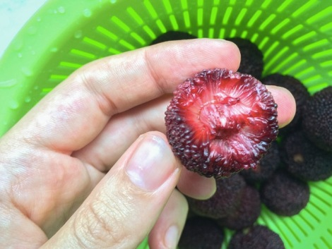 Chinese Strawberry Waxberry Yumberry 4