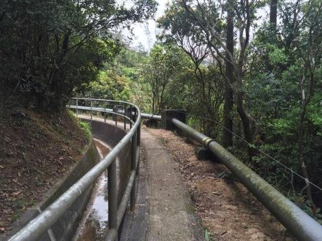 Wong Nai Chung Gap Trail Hong Kong Island April 2016-7