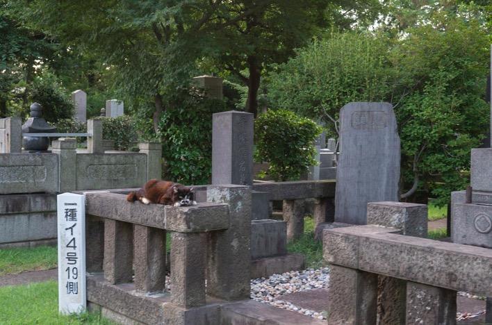 Tokyo Aoyama Cemetery 2015-8