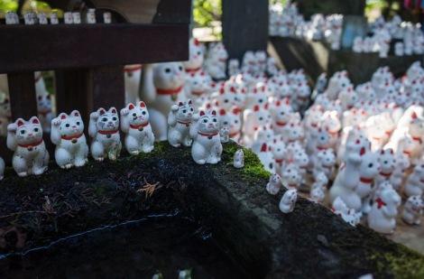 Tokyo Gotokuji Cat Shrine 2015-17