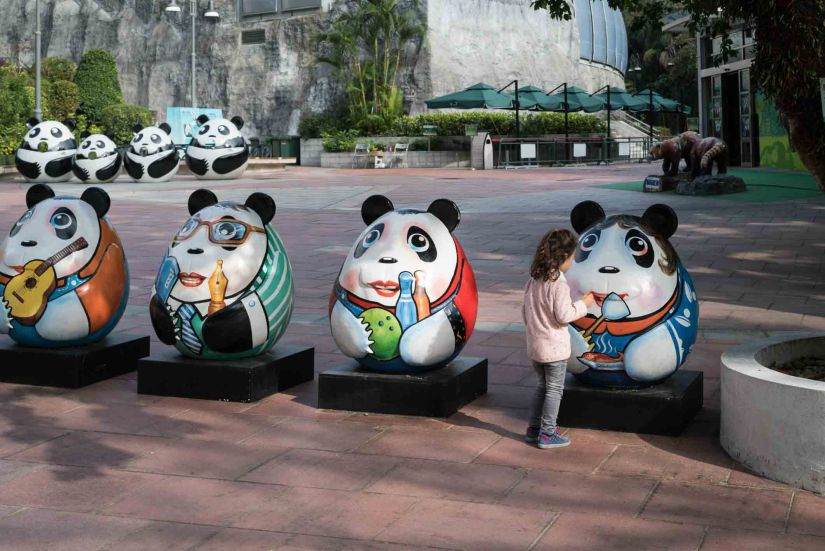 10 - Macau Giant Panda - Jan 2019