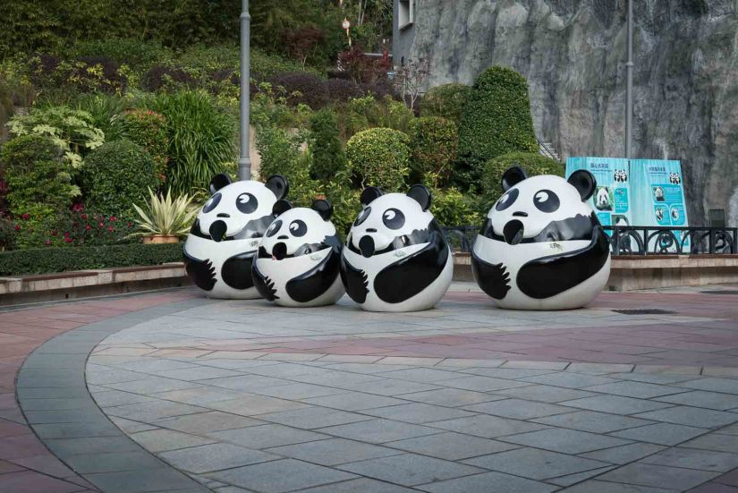 9 - Macau Giant Panda - Jan 2019